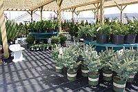 Outdoors Plants at Fontana Outdoors